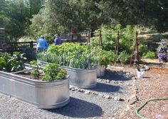 BBY 2012 - raised vegetable beds - Sandy's garden