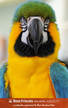 Ashton shows off his tropical beauty. #parrot #macaw