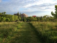 A view from the Humber Arboretum