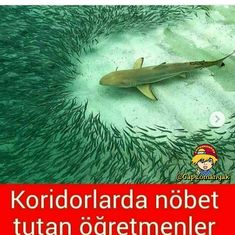 Öğretmen balinaya acıdım. Funny Memes, Hilarious, Jokes, Ridiculous Pictures, Funny Share, Just For Laughs, Funny Photos, Dumb And Dumber, Instagram Story