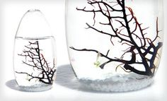 oohh! I'd like one :)   Groupon - $45 for a Small-Pod EcoSphere Closed Aquatic Ecosystem ($79 List Price). Free Shipping and Free Returns.  in Online Deal. Groupon deal price: $45.00