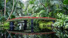 New York's Botanical Garden