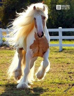Brumby Horse WOW