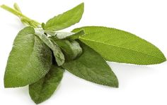Natural Menopause Solution: Hot Flash Remedies - Sage Tea - - Natural Menopause Solution: Hot F. Rashes Remedies, Cough Remedies, Natural Remedies For Menopause, Hot Flash Remedies, Menopause Symptoms, Menopause Relief, Alternative Therapies, Hot Flashes, Menopause