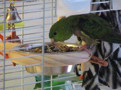 Parrot Perch, Parrot Bird, Bird Perch, Stainless Steel Washers, Stainless Steel Bowl, Cockatiel, Budgies, Parrots, Eat Fruit