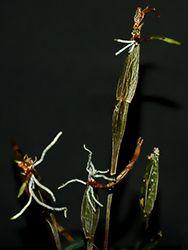 Bild von Brigitte Bertram - New Ideas Cymbidium Orchids, Pink Orchids, Modern Flower Arrangements, Wedding Ceremony Decorations, Home Pictures, Forest Wedding, Plant Hanger, Colorful Backgrounds, Holiday Decor