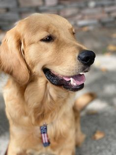 Our new dog Liberty. 1 year old golden retriever female saved from a China meat market company. Female Golden Retriever, Golden Retriever Rescue, Golden Retrievers, Animal Pictures, Cute Pictures, Clumber Spaniel, 2 Year Olds, Picture Captions, Animal Rescue Shelters