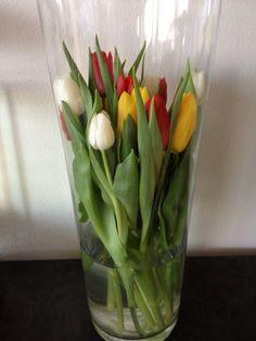 Tulpen in de oeteldonkse kleuren, in een hoge vaas.