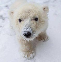 Picture used on NSVH 01-23-14 for Polar Bear Swim Day Jan 18th. *Polar Bear