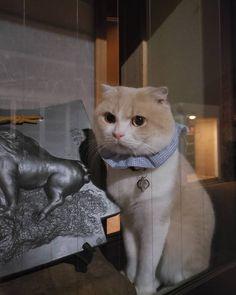Neko chan in Kyoto via Japanese Cat, Kyoto, Neko, Cute Cats, Animals, Instagram, Beautiful Cats, Animaux, Animales