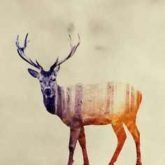 Double-Exposure Animal Portraits by Norwegian Photographer Andreas Lie, a visual artist based in Bergen, Norway.