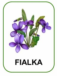 Dandelion Flower, Peony Flower, Flower Art, Spring Flowers, Purple Flowers, Paper Flowers, Free Flower Clipart, Purple Wall Art, Wreath Watercolor