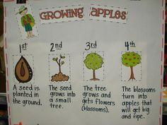 Growing apples flow map - do for pumpkins, too!