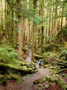 Hiking in Seattle - Mt. Si: This popular four-mile hike has a large measure of challenge (3,700 vertical feet of climbing) with an equal payoff (views of Mount Rainier, Seattle, and the Olympics on a clear day). The journey isn't so bad either: Along the way, hikers pass classic Pacific Northwest conifer forests, streams, and views over the valley.