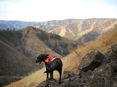Why Poop Sniffing-Dogs Are Saving Endangered Species