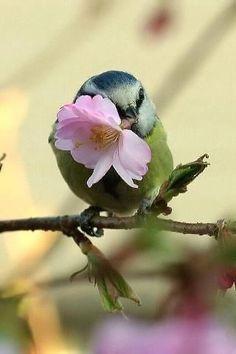 Bird with flower.