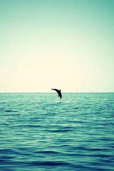 I ♥ dolfijnen en aan deze foto hangt nog een vintage sfeertje ♥♥♥