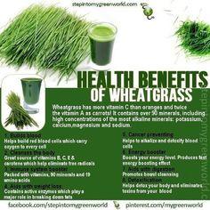 wheatgrass benifits