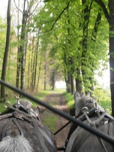 Castle and Palace 2 Day Tour - Studniska Horse Centrum Visit Poland, Day Tours, Palace, Castle, Horses, Activities, History, Country, Animals