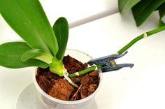 Cum se transplantează un pui de orhidee Garden Tools, Rare Orchids, Balcony Garden, Herbs, Plants, Small Gardens, Secret Garden, Orchid Care, Indoor Plants