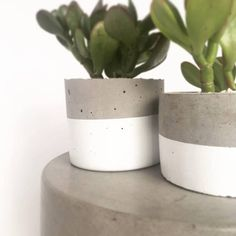 Cylinder Concrete Planter / Round Pot for succulents and cacti