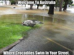 Funny pictures about This is what they call a flooding in Australia. Oh, and cool pics about This is what they call a flooding in Australia. Also, This is what they call a flooding in Australia photos. Australia Funny, Visit Australia, Australia Living, Australia Travel, Australia House, Australia Photos, Queensland Australia, Koala Meme, Funny Koala