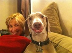 Un chien qui sourit pour la photo