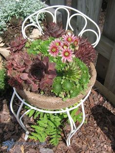 Creative+Planter+Ideas+for+the+Garden. Succulents in hypertufa planter replaces chair seat. Succulent Planter Diy, Vertical Planter, Hanging Succulents, Succulents Diy, Succulent Plants, Diy Concrete Planters, Diy Planters, Hanging Planters, Chair Planter