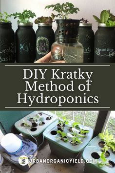 Growing vegetables without soil is easy. The process is called hydroponics method of gardening. Using what's called the Kratky method will make hydroponics even easier. This method is low cost and low maintenance and easy to setup for beginners. Your vegetables will taste fantastic by the way. #Hydroponics #HydroponicsGardening #VegetableGardening #Gardening #UrbanOrganicYield Indoor Hydroponic Gardening, Hydroponic Vegetables, When To Plant Vegetables, Backyard Aquaponics, Growing Vegetables, Container Gardening, Backyard Vegetable Gardens, Vegetable Garden Design, Small Garden Design