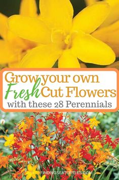 Fresh Cut Flowers With These 28 Perennials flower garden 28 Best Perennials for a Cutting Flower Garden - Finding Sea Turtles Cut Flower Garden, Flower Garden Design, Beautiful Flowers Garden, Flower Farm, Amazing Flowers, Flower Gardening, Cut Garden, Best Perennials, Flower Landscape