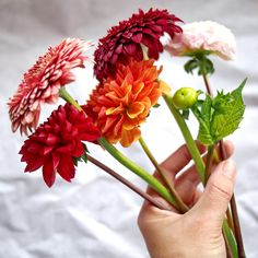 Fee ist mein Name: #2flowergirls – Flowers for Inga