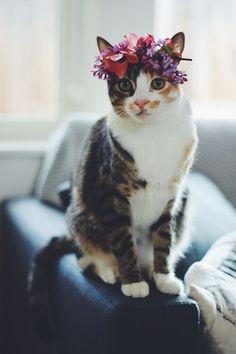 cute wedding kitty with plum purple flower crown