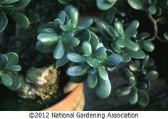 NGA Plant Finder :: National Gardening Association shade garden
