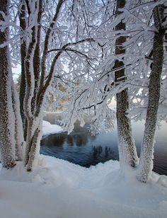 Winter Szenen, I Love Winter, Winter Magic, Winter Trees, Winter Christmas, Snow Pictures, Winter's Tale, Snow Scenes, Winter Beauty
