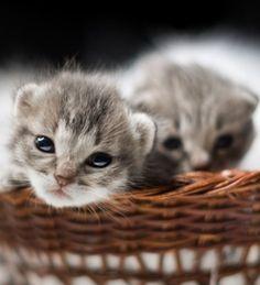Basket full of cute