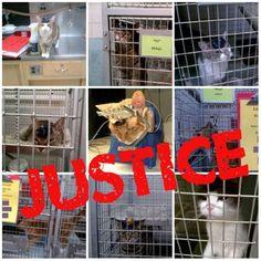 Repin this pic & tell UW-Madison to STOP torturing cats like this! http://peta.vg/105  #speakup #cats #UWMadison #animalcruelty #neverbesilent #takeaction #animals