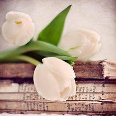 Flores, paisajes y libros