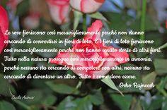 Le rose fioriscono così meravigliosamente perché non stanno cercando di convertirsi in fiori di loto. ...
