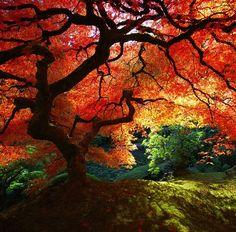 Gorgeous autumn #tree