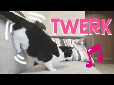My Cat is Dancing Twerk! - We Love Cats and Kittens