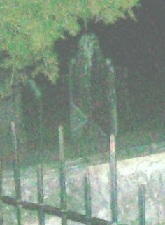 Scary Pictures Real Ghost | Ghost Photo of the Day: Cemetery Apparition | Ghosts and Ghouls