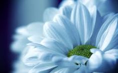 Image result for photography flowers close up