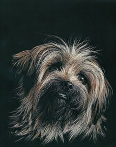 Truffles is a rehomed little doggie that belongs to a friend of mine. Just could not resist scratching that bootiful face. Pencil Drawings Of Animals, Art Drawings, Watercolor Negative Painting, Black Paper Drawing, Scratchboard Art, Scratch Art, Fox Art, Dog Paintings, Art For Art Sake