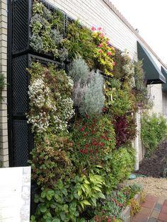 Vertical Garden   Flickr - Photo Sharing!