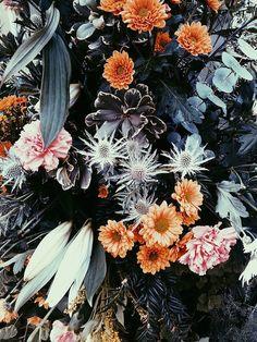 Pattern / flowers, pattern