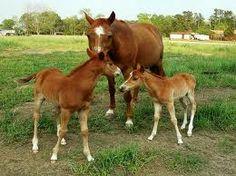 Horse 4 Beautiful Black Animal Nature Friends Odd-toed Ungulate Mammal Poster