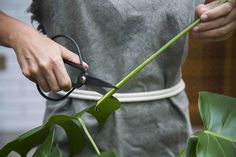 tesoura jardim e avental lona