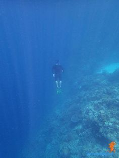 free diving at Moalboal Underwater, Diving, Shots, Free, Animals, Animales, Scuba Diving, Animaux, Under The Water