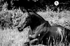 AQHA mare :: Step By Broadylena action at the pasture