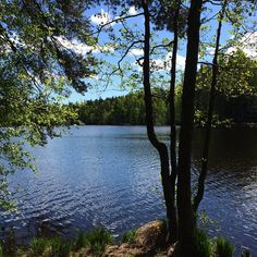 Kuusijärvi ©sarikristiinatar #pientalojapiha